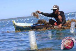 Australia Menangkan Gugatan Petani Rumput Laut NTT