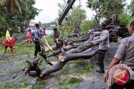 DLHK Denpasar tangani pohon perindang tumbang