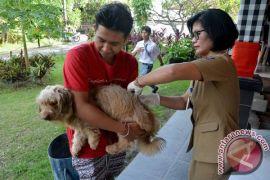 Pemkot Denpasar lakukan vaksinasi cegah rabies