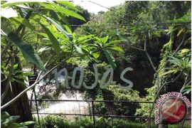 Makanan Sehat Mulai Dilirik Pecinta Kuliner di Bali (Video)