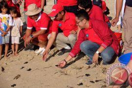 Pertamina Dorong Pelestarian Penyu di Bali