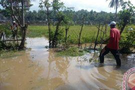 Puluhan Rumah Warga Jembrana Terendam Banjir