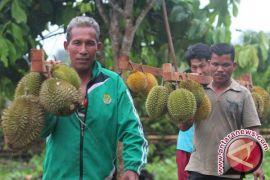 Ilmuwan Mengungkap Asal Bau Tajam Durian