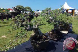 Pameran Pohon Bonsai Sedot Pengunjung NDF 2017
