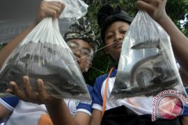 Festival budaya perikanan Badung kampanyekan gemar ikan