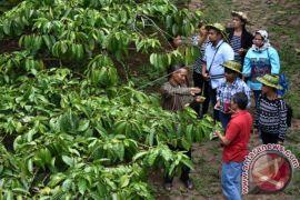 Timor Leste Belajar Kopi Indonesia