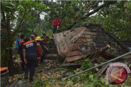 Pohon Kramat Tumbang Timpa Pura Prajapati Denpasar