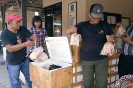 Daging Tanpa Dokumen Kembali Disita di Gilimanuk
