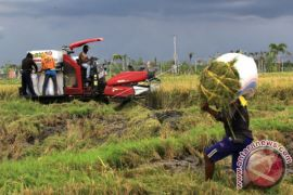 Indonesia has sufficient rice stock: official