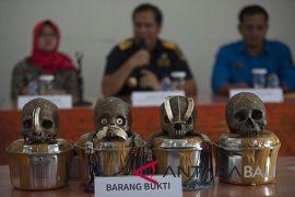 PT Pos Bali-Nusra tahan paket tengkorak manusia