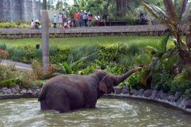 Kunjungan wisatawan ke Bali Zoo meningkat 125 persen