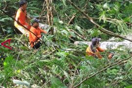 Tumbang, pohon kelapa di Gianyar timpa kabel PLN
