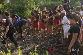 Mahasiswa Unud dan Pemkab Jembrana kembangkan hutan bakau