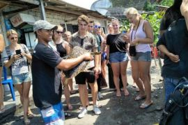 76 telur penyu menetas di Pantai Nimbangan