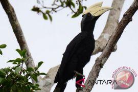 Polisi tangkap pencuri burung di Jembrana