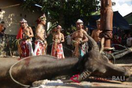 Ritual Adat Balian Bawo