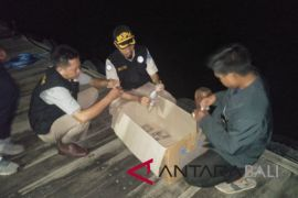 Karantina Denpasar gagalkan penyelundupan 10.120 benih lobster