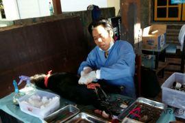 SBD lakukan aksi peduli anjing di Buleleng