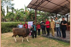 Hari Raya Idul Adha, Telkomsel serahkan 740 ekor hewan kurban