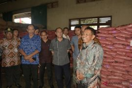 Badung tertarik kembangkan bibit padi unggul bersertifikat