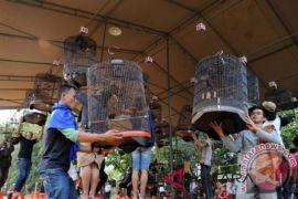 Harga burung juara berkicau bisa capai Rp600-700 juta