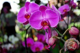 Kementan ungkap prospek bisnis bunga hias