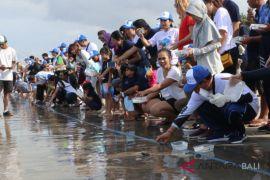 JBT lepas ratusan tukik di Pantai Kuta