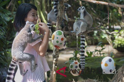 Bali Zoo's animals hunt easter eggs