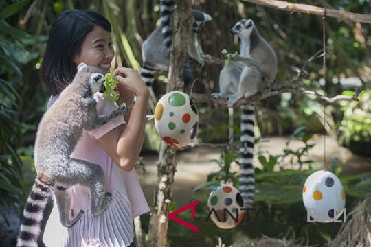 Bali Zoo's animals hunt easter eggs