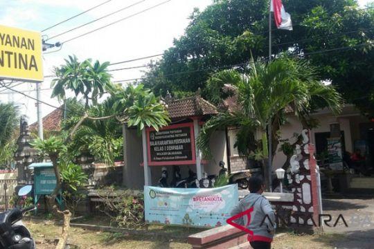 Balai Karantina: Sapi Bali diselundupkan untuk langgar kuota