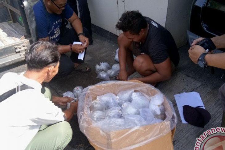 Polisi Menggagalkan Penyelundupan Terumbu Karang Hidup