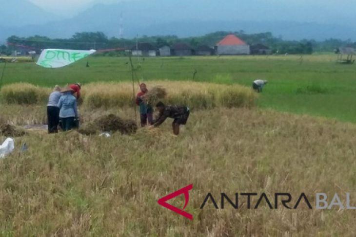 Harga beras Kabupaten Jembrana masih tinggi