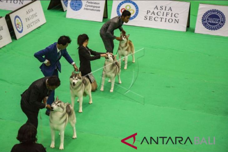 International Dog Show 2018