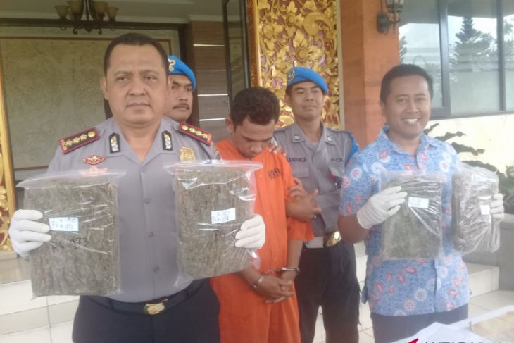 Polresta Denpasar ringkus pengedar ganja (video)