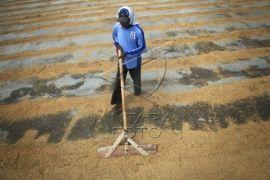 Bupati: Petani Penentu Peningkatan Produksi Gabah