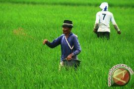Sektor Pertanian Mampu Mendongkrak NTP Banten 0,65 Persen