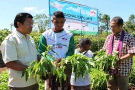 Budidaya Sayuran Solusi Kekeringan di NTT