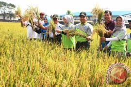 Tangerang Berkebun, Warga Hasilkan Pangan Bergizi