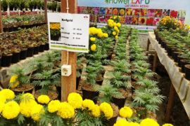 Ewindo Sosialisasi Bertanam Bunga Melalui Benih
