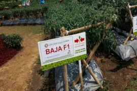 Ewindo Luncurkan Lima Varietas Unggul Sayuran