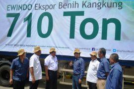 Ewindo Ekspor 710 Ton Benih Kangkung