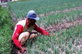 NTP Banten Desember Naik 0,24 Persen