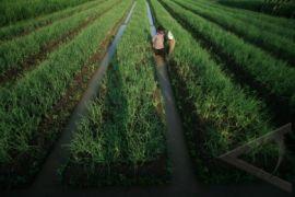 Tangerang Akui Lahan Pertanian Produktif Pantura Berkurang