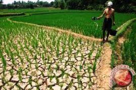 PKB Banten Optimistis Dana Desa Tumbuhkan Ekonomi