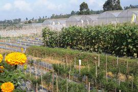 Distan Banten Kembangkan Kawasan Pertanian Berbasis Korporasi