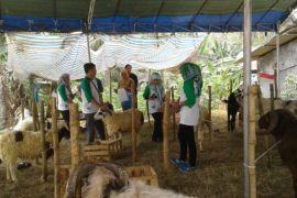 Distan Banten Turunkan Tim Periksa Hewan Kurban