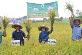 Kebijakan Jokowi Dorong Produksi Pangan Di Daerah
