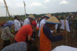 Banten Kembangkan 1.000 Ha Jagung Berbasis Korporasi