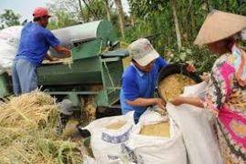 Kebijakan Presiden Joko Widodo sektor Pertanian Dirasakan Petani Kabupaten Lebak,
