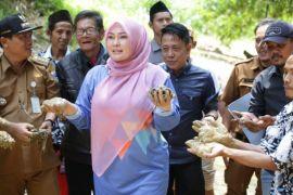 Bupati Pandeglang Laporkan Pencemaran Sungai Cimoyan Pada Gubernur Banten